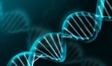 Les anomalies génétiques